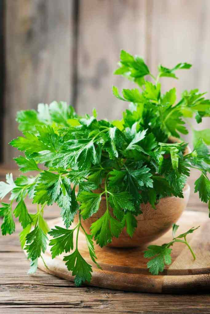 Parsley Grows Indoors In Winter