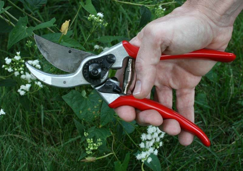 Pruners As Garden Tools
